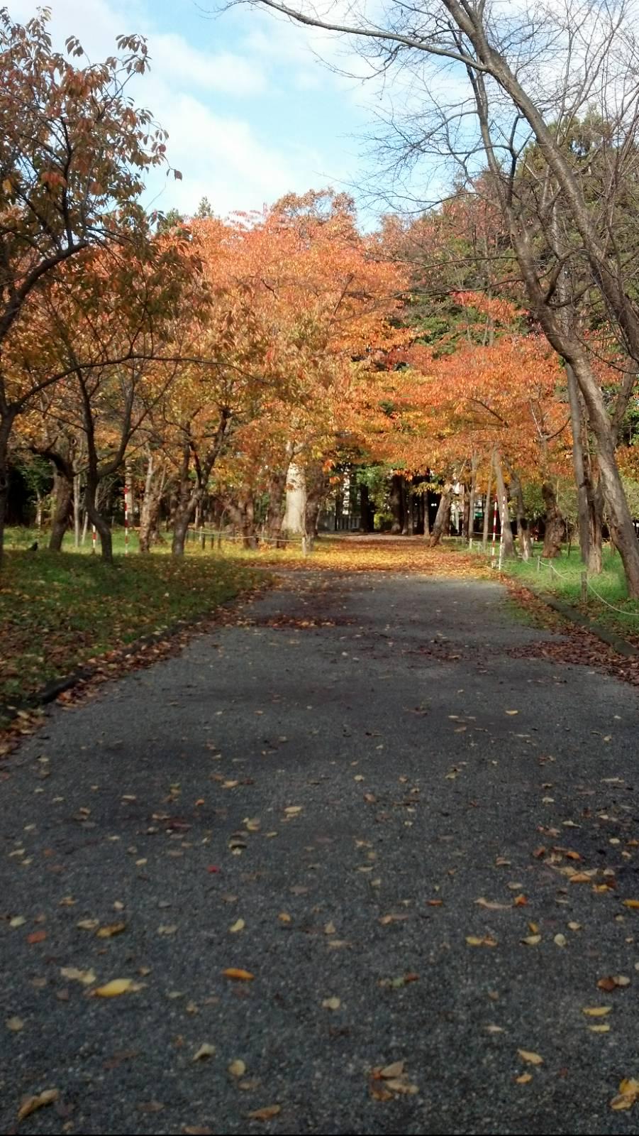 http://gentleone.jp/teams/hokkaido/2012-11-10_10-24-57_841-1.jpg